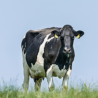 Lactalis D&G dairy photography