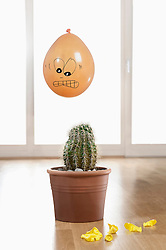 Close-up of a scared balloon above a cactus plant, Bavaria, Germany