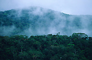 PRIMARY RAINFOREST, Amazon, near Boavista, northern Brazil, South America. Primary rainforest and low clouds amongst mountains and hills. Ecological biosphere and fragile ecosystem where flora and fauna, and native lifestyles are threatened by progress and development. The rainforest is home to many plants and animals who are endangered or facing extinction. This region is home to indigenous primitive and tribal peoples including the Yanomami and Macuxi.