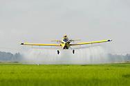 Crop duster spraying a rice field near Hazen Arkansas in July.