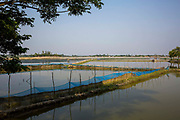 Fish Farming, flooded land is sectioned off in areas on the 2nd of October 2018 in Satkhira District, Bangladesh. Satkhira is a district in southwestern Bangladesh and is part of Khulna Division. It's main contributors to the economy are shrimp, fish and paddy farming. It is on the bank of the Arpangachhia River.