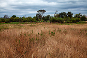 Coastal Prairie, Madrona Marsh Wetlands is a vernal freshwater marsh and is approximately 43 acres. torrance, California, USA