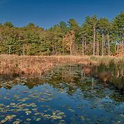 Ipswich River Wildlife Sanctuary, Topsfield, Massachusetts