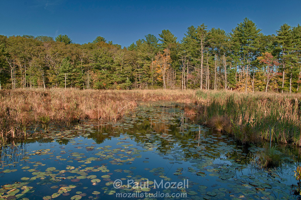Ipswich River Wildlife Sanctuary, Topsfield, Massachusetts