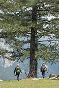 Hikers walking under big tree, Col de Bavella, Corsica, France