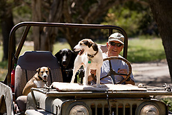 Stock photo of a man in his ranching jeep with his three dogs in the Texas Hill Country