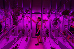 © Licensed to London News Pictures. 03/09/2018. London, UK. Gallery assistant inside the greenhouse installation titled Power Plant by Marjan van Aubelis representing The Netherlands  Pavillion at the London Design Biennale. The  event will see some of the world's most exciting and ambitious designers, innovators and curators gather to show how design impacts our very being and every aspect of our lives.