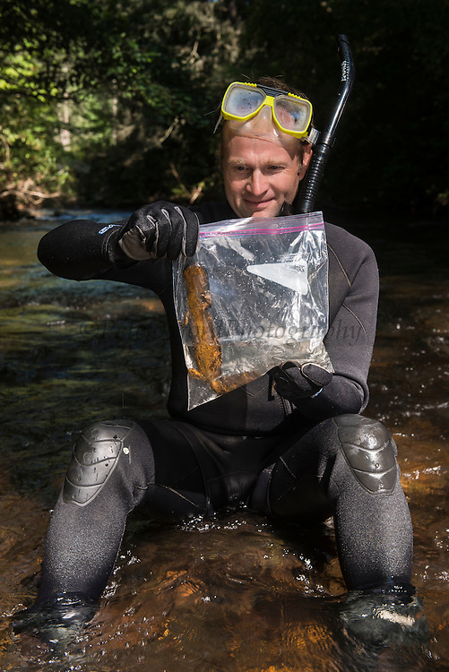 Researcher Stephen Spear looking & Eastern Hellbender (Cryptobranchus alleganiensis <br /> Cooper's Creek,  Chattahoochee National Forest<br /> Georgia<br /> USA