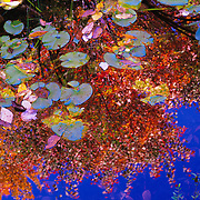 Brilliant fall colors reflect in still waters at Sieur de Monts Gardens in Acadia National Park, Maine.