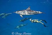 Emily Sepeta swims with Hawaiian spinner dolphins or Gray's spinner dolphin, Stenella longirostris longirostris, off Ho'okena Beach, South Kona, Hawaii ( the Big Island ), USA ( Central Pacific Ocean ) MR 494