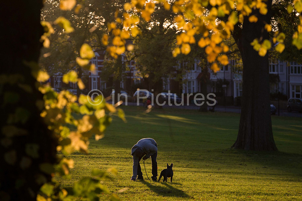 A dog owner bends down to pick up his dog's mess in an Autumnal park. Surrounded by autumn leaves, brown and yellow in afternoon sunlight, the man stoops to collect the dog's crap on the grass in Ruskin Park in the London borough of Lambeth. In the background are Edwardian period homes on Finsen Road, SE24. If in contact with such organic material, it's known to cause Toxocariasis - especially in children - a condition caused by bacteria that travels to the human eye so it is expected that pet owners take the faeces away, wrapped in plastic bags and deposited in specially-provided bins at various entrance and exit gates.