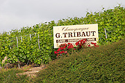 A sign in the vineyard for Champagne G Tribaut, wine cellar, tasting, sale, the village of Hautvillers in Vallee de la Marne, Champagne, Marne, Ardennes, France