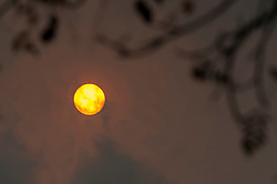 © Licensed to London News Pictures. 16/10/2017. London, UK. The mid afternoon sun is seen overhead in Holland Park, west London.  Dust brought by winds from Hurricane Ophelia has caused the sun to appear a mysterious reddish orange colour. Photo credit : Stephen Chung/LNP