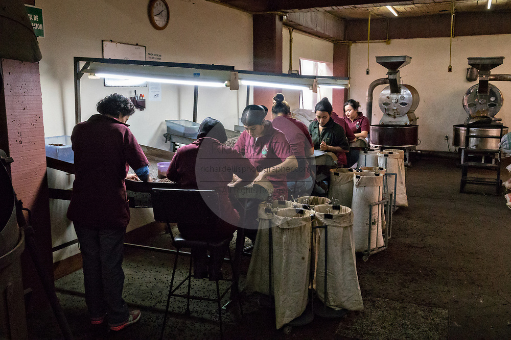 Women work in a coffee roasting facility at the Old World Coffee company in Uruapan, Michoacan, Mexico. Coffee cultivation in the volcanic mountainous region of Uruapan is slowly being replaced by Avocado farms.
