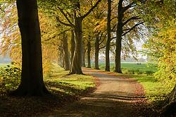 Spanderswoud, Natuurmonumenten, 's-Graveland, Wijdemeren, Netherlands