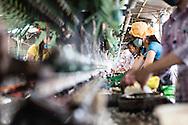 Process of reeling silk filament in a silk production factory, Da Lat, Vietnam, Southeast Asia