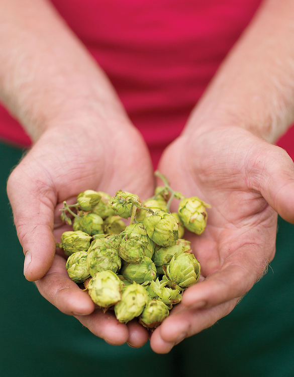 Mike Ford of Grandpops Hops in Marysville. (Will Shilling/Crave)