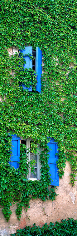 Ivy covers the walls of an old home in Bonnieux in Provence. France.