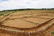 Africa, Tanzania, Lake Eyasi National Park onion farming