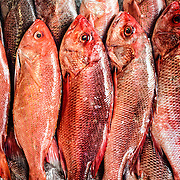 Red Snapper for sale at the historic Maine Avenue Fish Market in Washington DC, the country's oldest continuously running open air fish market.