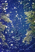 Giant snowflakes at night in the backyard
