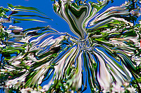 abstrat white and green colors of the nature in spring. Fluid shapes on blue background.
