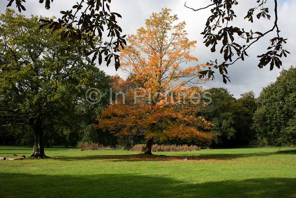 Autumn trees with fallen leaves during Autumn in Highbury Park in Birmingham, United Kingdom. Highbury Park is located on the borders between Moseley and Kings Heath.