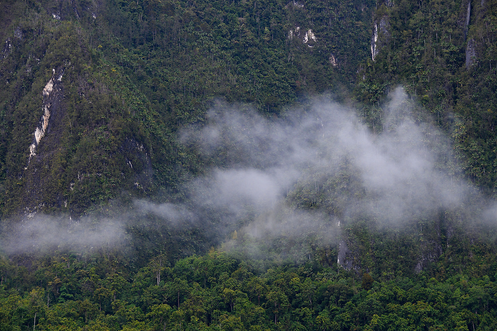 """Morning mist in the rainforests around Lobo village, Triton Bay, mainland New Guinea, Western Papua, Indonesian controlled New Guinea, on the Science et Images """"Expedition Papua, in the footsteps of Wallace"""", by Iris Foundation"""
