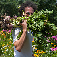 A curly-haired gardener smiles behind a large bunch of freshly dug red-topped turnips.