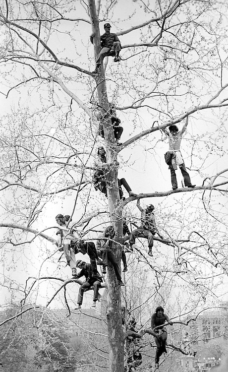 Lt. John Kerry speaks to antiwar protestors - here listening from a tree on the U.S. Capitol grounds during massive demonstrations against the Vietnam war on April 23, 1971. - To license this image, click on the shopping cart below -