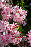 Summer Blossom Taormina, Sicily