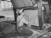 5607Sewing a bale of hops. Ray De Main at the E. Clemens Horst hop ranch near Independence, Oregon. September 1, 1942.