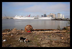 17th Feb, 2006. New Orleans, Louisiana. Controversial cruise ships, Carnival Lines Ecstasy and Sensation lie at dock on the east bank of the Mississippi river. Both ships have been hired at vast expense to house police, fire fighters and many of the city's first responders and workers. However at the end of February, Ecstasy is due to sail, technically rendering homeless many of the city's vital first response teams at the hight of Mardi Gras. A stray dog, now common in New Orleans wanders along the shore line.