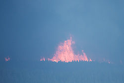 Hayden Valley forest Fire, Yellowstone National Park. Fire is a part of the natural ecosystem and is need to provide overall balance of natural systems. See article<br /> <br /> http://daryl-hunter.net/all-about-the-yellowstone-fires