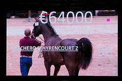Veilingtopper, 092, Zucchero D'Hyrencourt Z<br /> BWP Hengsten keuring Koningshooikt 2015<br /> © Hippo Foto - Dirk Caremans<br /> 23/01/16
