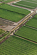 Sugarcane Plantations & empty Canal Punts<br /> Georgetown<br /> GUYANA<br /> South America