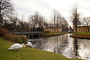Swans in the lake in front of the Sans Souchi Palace, Potsdam, Brandenburg, Germany.
