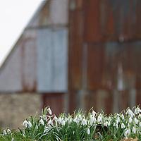 Voorjaar in Friesland
