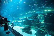 Dubai, UAE, Feb 12, 2010, Dubai Aquarium and Underwater sea is the largest aquarium in the world at the Dubai Mall.<br /> . PHOTO © Christophe Vander Eecken
