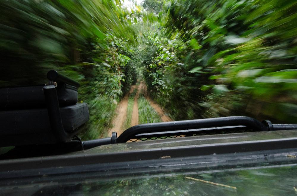 Road to Gabon<br /> Ngaga<br /> Republic of Congo (Congo - Brazzaville)<br /> AFRICA