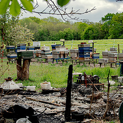 Stanton woods fire, Once a wonderful place full of bee hives 2020