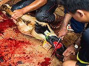 12 SEPTEMBER 2016 - BANGKOK, THAILAND:  A goat is sacrificed during the Qurbani (ritual sacrifice of livestock) at the celebration of Eid al-Adha at Haroon Mosque in Bangkok. Eid al-Adha is also called the Feast of Sacrifice, the Greater Eid or Baqar-Eid. It is the second of two religious holidays celebrated by Muslims worldwide each year. It honors the willingness of Abraham to sacrifice his son, as an act of submission to God's command. Goats, sheep and cows are sacrificed in a ritualistic manner after services in the mosque. The meat from the sacrificed animal is supposed to be divided into three parts. The family retains one third of the share; another third is given to relatives, friends and neighbors; and the remaining third is given to the poor and needy.         PHOTO BY JACK KURTZ