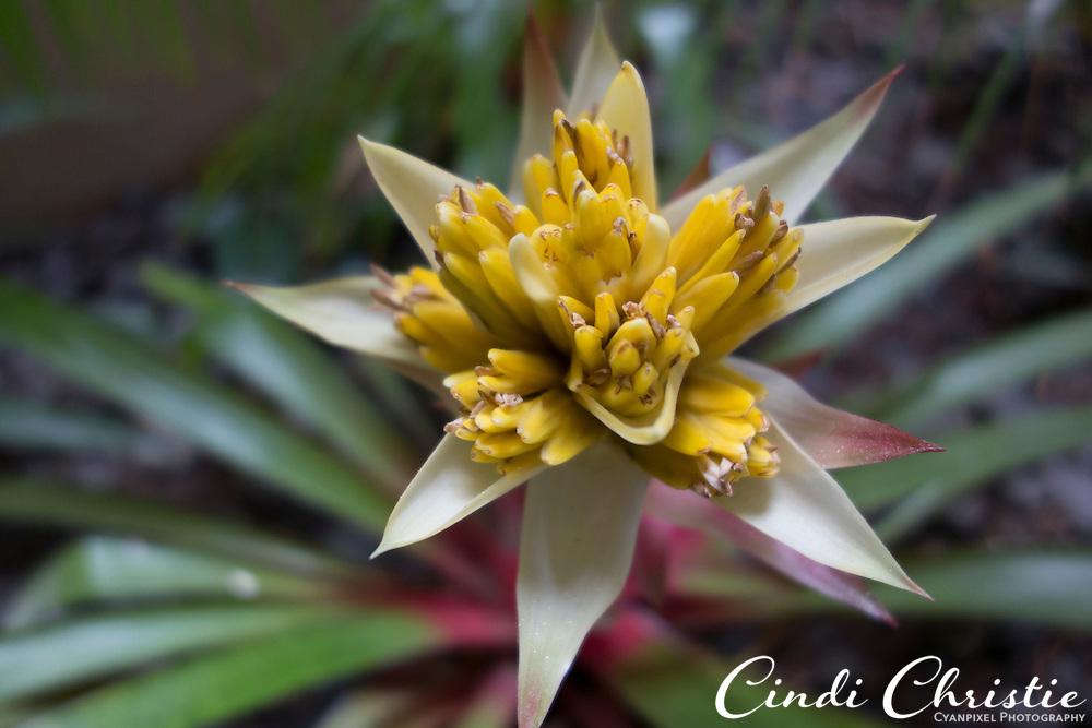 An unidentified flower is seen on the grounds of the Ka'anapali Beach Club on Wednesday, Oct. 30, 2013. (© 2013 Cindi Christie/Cyanpixel)