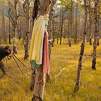 A photographer frames Native American prayer cloths that adorn aspen trees at a sacred site in the Saskatchewan River Valley near Banff National Park in Alberta, Canada.