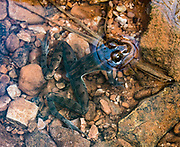Frog in Moonflower Canyon, on BLM land, Moab Kane Creek Blvd, Moab, Utah, USA. The BLM (Bureau of Land Management) is part of the United States Department of the Interior.