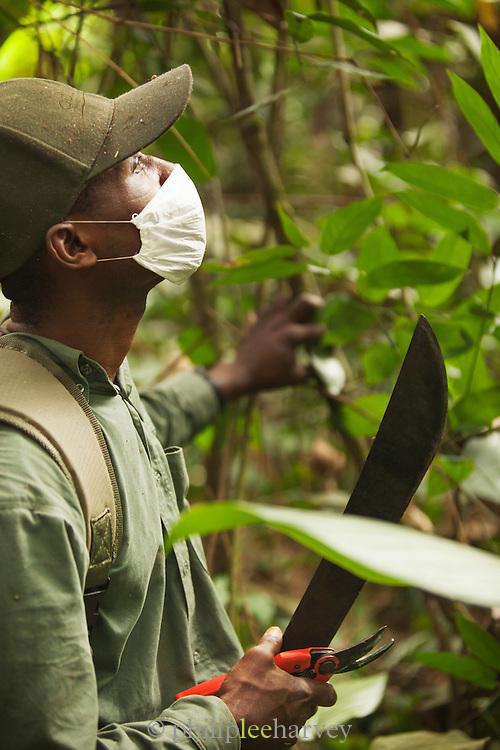 Man with machete in the Odzala-Kokoua National Park.