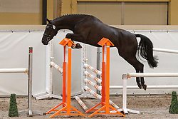 174 - Cirnanda<br /> KWPN Paardendagen Ermelo 2010<br /> © Dirk Caremans