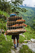 A Sherpa porter carrying a basket of live chickens along a stony path towards guesthouses on the Annapurna Base Camp trekking route, Kimche, Annapurna Sanctuary Trek, Nepal