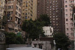 October 4, 2018 - Hong Kong, CHINA - A large Chinese Banyan Tree ( Ficus Microcarpa ), a tree that spread across vast regions in S.E.Asia is seen here rooted down and thrived on a building for many decades at San Ying Pun, Western part of Hong Kong Island. Oct-4,2018 Hong Kong.ZUMA/Liau Chung-ren (Credit Image: © Liau Chung-ren/ZUMA Wire)