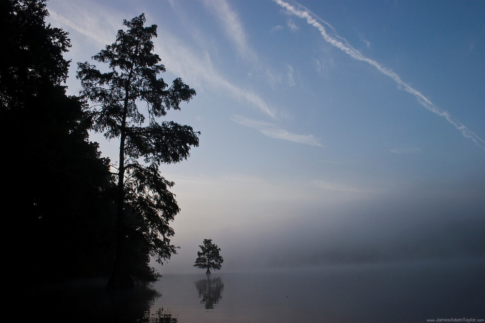 contrails and morning mist over Trap ponds Cypress trees, Delaware.